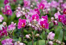 umtopfen v. orchideen