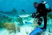 DEEP SUB DIVING / Los hombres no pueden volar, los submarinistas si. Jacques Cousteau
