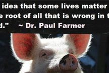 Animal Rights / Anything and everything to do with the rights of animals.