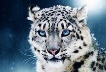 Animals 動物 / by Kingman Sheih 薛無