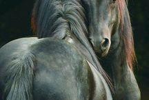 любимые лошадки