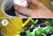 Future veggie garden