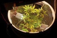 Plantspann