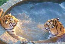 Hot Tub Fun / Hot tub fun and relaxation.