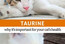Cat Health & Nutrition