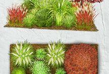 Pflanzen für unseren Garten