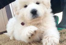 Cute puppy i love it