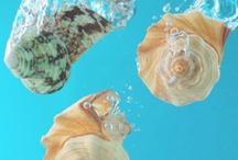 7 Seas / by Carly Heidorn