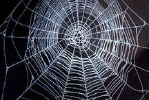 蜘蛛の巣柄