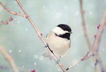 Fugler / Bilde