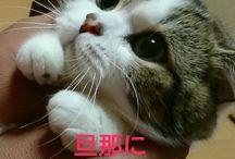 love cat's