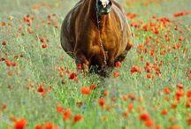 Bloemenweiland