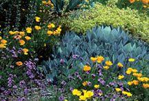 California native garden / by Esther Harris