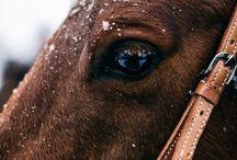 állati szemek