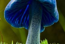 Awesome creations, Moss,  Mushrooms.......