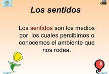 5 Senses (Los 5 Sentidos)