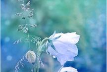 flora / by Lisa Romero