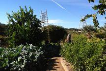 Wine Country / Un paseo fotográfico por los paisajes y viñedos del Wine Country.