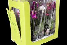 orchid parkage