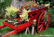 Gardening / by Tina Allgeier