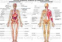 Theta Healing Intuitive Anatomy / Theta Healing Intuitive Anatomy