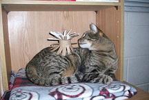 Kat en zo