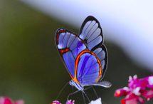Butterfly Kissing Flower