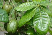 Unusual & Edible Plants