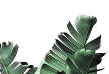 Plant obrazy
