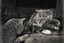 Cats in B&W Photos