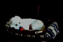 My doggie / My adorable, fluffy dog