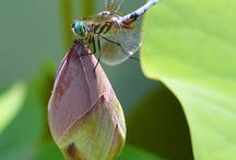 Dragonfly / by Brandis Dunn