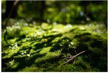Green ❤