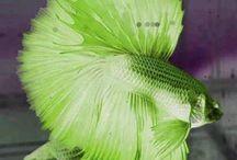 Cores - VERDE, Green, Vert