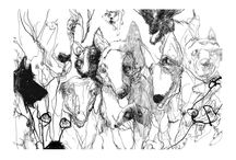 Animals / Drawings and Illustrations of Animals