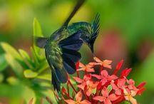 Amazing world around us. / Nature, flowers, beauty and piece.