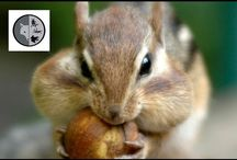 Mammals / Films on mammals of Eastern North America. Join Films Nature web TV on Youtube to see web series on wildlife.