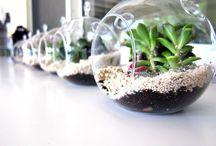 <3 plants <3 / by Lauren Hanzlik
