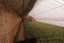 Greenhouse / Szklarnie