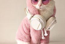 Tatlı Hayvanlar :)