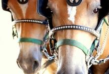 Love Draft Horses / by Charlene Hornbaker Mulcahy