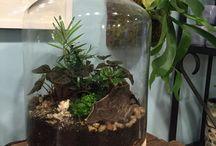 piante grasse nei vasi