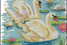 labutě - vodní ptáci
