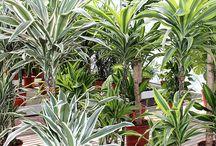 Serra - Greenhouse / Immagini dalla Serra di Euro Plants Vivai.