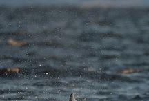 Kosatky