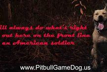 Pitbull GameDog Area