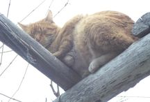 Lazy Cats *-*