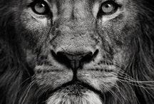 Leeuwen