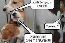 Animal Funnies / by Ashley Pieper