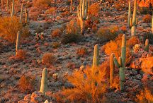 US State - Arizona